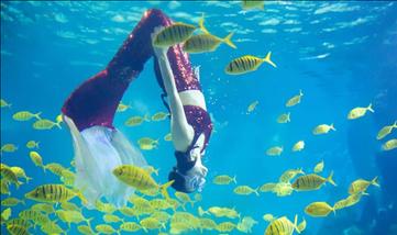 【金鹰聚龙湖】金鹰海洋世界-美团