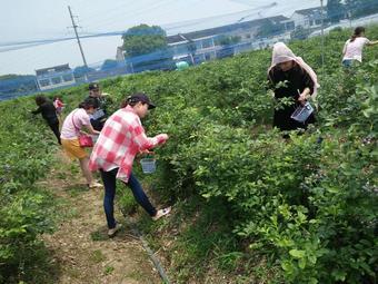 花山蓝莓采摘园