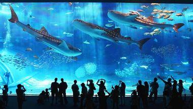 【罗源湾滨海新城】罗源湾海洋世界门票双人票(含美人鱼+海狮+海豚表演)-美团