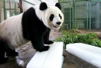 【天桥区】济南动物园门票(成人票)-美团