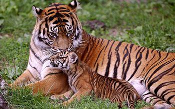 【竞秀区】爱保野生动物世界平日门票(成人票)-美团