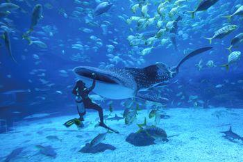【滨海路】烟台海昌鲸鲨海洋公园单人年卡成人票-美团