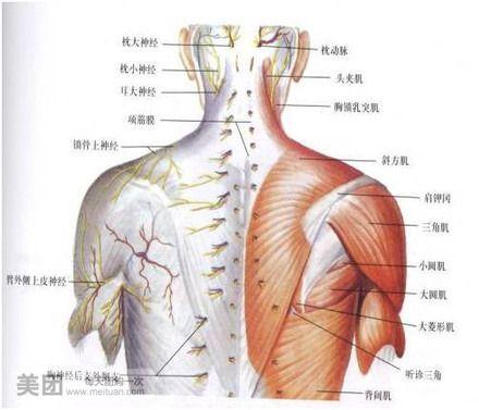 颌部骨结构图片