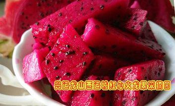 【盐湖区】兴运龙火龙果采摘园-美团