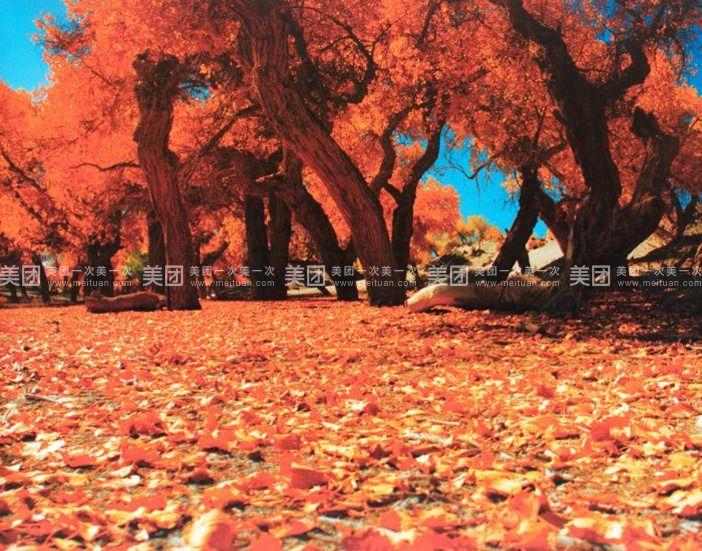 西部梦幻大峡谷 胡杨林 怪树林 居延海 巴丹吉林沙漠五日游