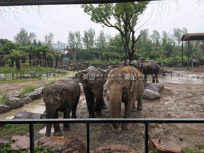 上海野生动物园是位于上海浦东新区境内,展区占地153公顷(约2300亩),于1995年11月18日正式对外开放,在2007年被授予5A级旅游景区(点)。园内汇集着世界各地具有代表性的动物和珍稀动物二百余种,上万余头(只),其中有我国特产的重点保护动物大熊猫、金丝猴、金毛羚牛等,也有来自国外的长颈鹿、斑马、羚羊、白犀牛、猎豹等。 率先倡导动物健康运动,初步建设有中国特色的动物健康运动中心。