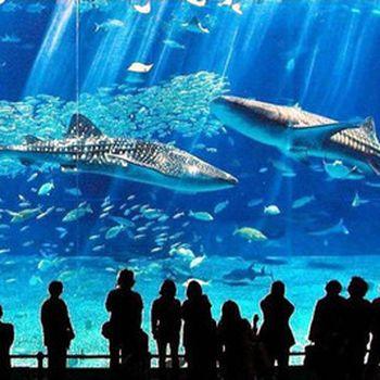 【浙东商贸城】六安海洋大世界年卡门票成人票-美团
