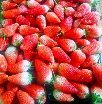 【大连等】庄河花果山牛奶草莓-美团