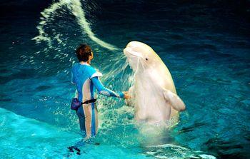 【其它】圣亚海洋世界四馆门票+星海鲲鹏快艇(成人票)-美团