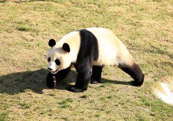 【大丰市】大丰港动物园-美团