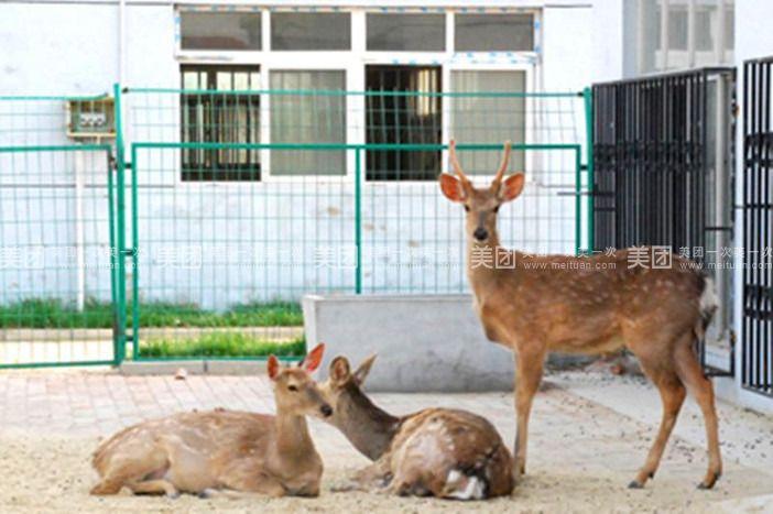 【滨州蒲园动物园团购】蒲园动物园单人票团购|价格
