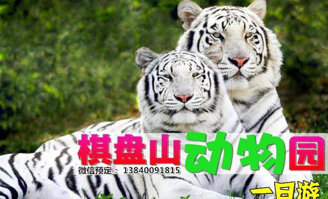 【多商圈】棋盘山森林动物园