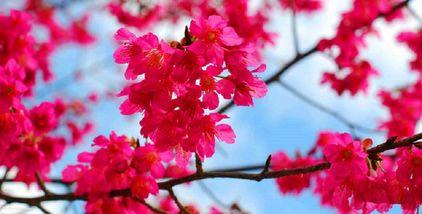 【新丰县】樱花峪门票成人票-美团