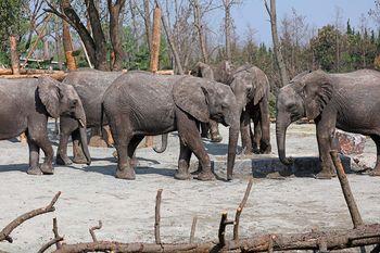 【野生动物园】野生动物园门票+猛兽区大巴游览车票(成人票)-美团