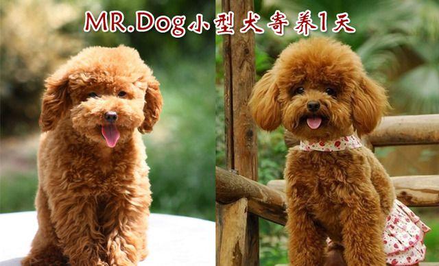 MR.DOG宠物店小型犬寄养1天,仅售18.8元!价值30元的小型犬寄养1天1次,提供免费WiFi。