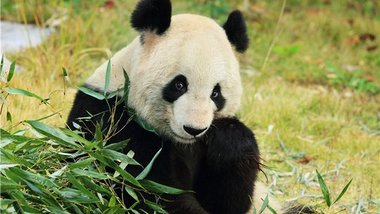 【城东】茱萸湾风景区(扬州动物园)门票(双人票)-美团