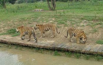 【淹城】淹城野生动物世界-美团