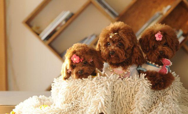 宠物宝宝全年寄养,仅售3499元!价值7200元的全年寄养1次,提供免费WiFi。