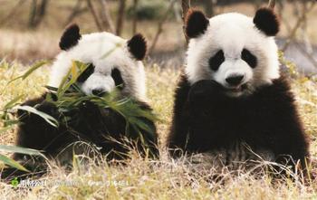 【下渚湖】下渚湖熊猫园大门票(成人票)-美团