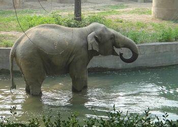 【其它】北京动物园门票+北京海洋馆淡季门票(成人票)-美团