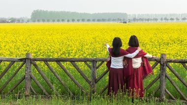 【代村农展馆】兰陵国家农业公园-美团