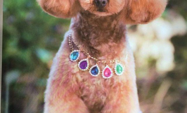 dogo宠物会馆大型犬护理套餐,仅售75元!价值150元的大型犬护理套餐,提供免费WiFi。dogo宠物美容会馆位于哈西,是一家集宠物美容、宠物寄养等为一体的专业宠物机构。