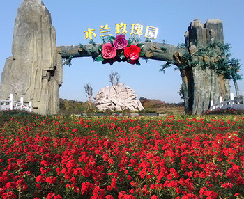 【黄陂区】木兰玫瑰园风景区门票成人票-美团
