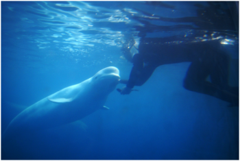 【三姑度假区】武夷山极地海洋公园-美团
