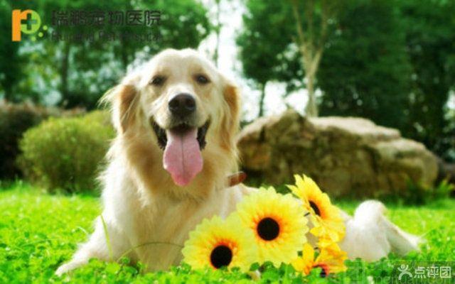 :长沙今日钱柜娱乐官网:【瑞鹏宠物医院】幼猫免疫套餐