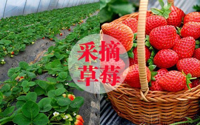 亚亚草莓采摘基地-美团