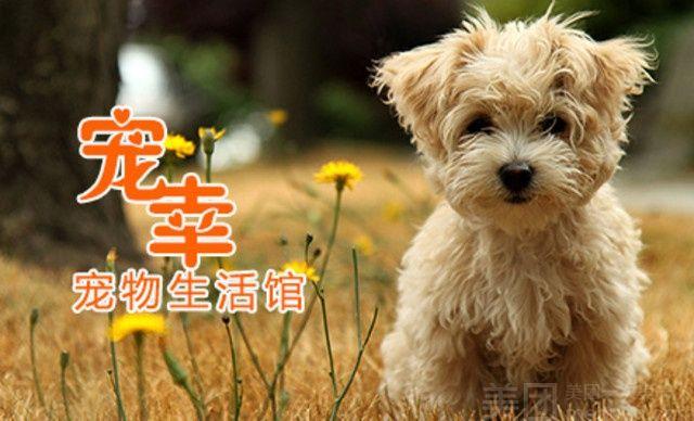 宠幸奇米果宠物护理-美团