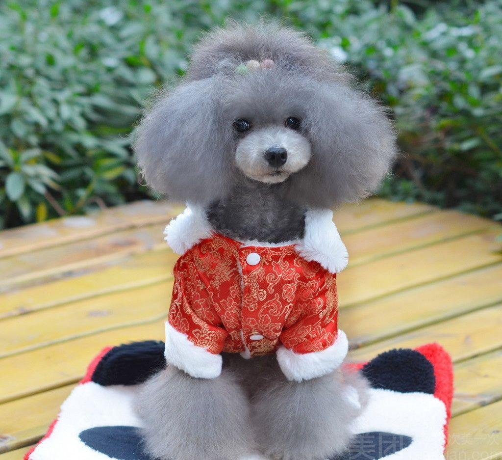 狗狗 毛绒玩具