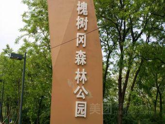 槐树冈森林公园