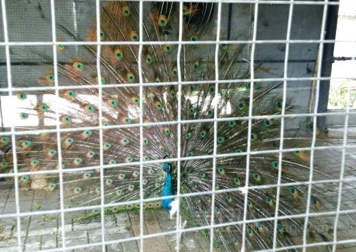 莲花山动物园