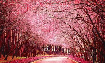 【金堂县】花田广兴宝塔浪漫樱花园成人票-美团
