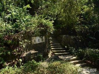 裸子植物系统园