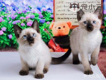 宠小二纯种宠物猫舍·猫咪活体(银泰城店)