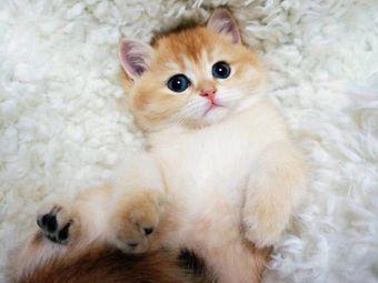 sweet cat宠物猫舍(汉街店)