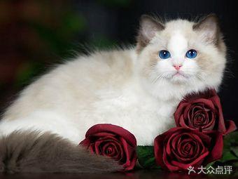 cici的喵语.世界名猫宠物猫舍