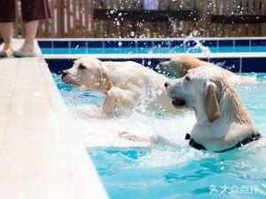 趣玩宠物狗寄养训犬训狗游泳池
