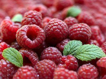 德泽有机树莓生态园