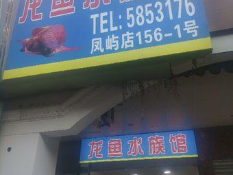 龙鱼水族馆(凤屿店)