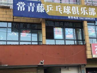 常青藤乒乓球俱乐部