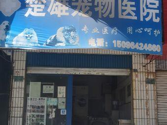 楚雄宠物医院