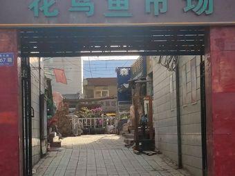 武威花鸟鱼市场