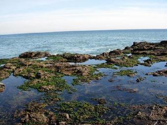 鮑魚灣海岸線公園