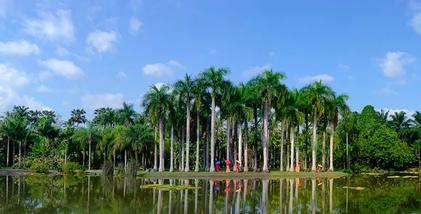 【勐腊县】中国科学院西双版纳热带植物园门票(含西园区游览车)(成人票)-美团