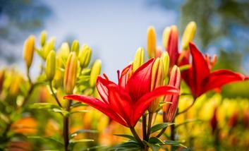 【上海南站】上海植物园手机智能导游(不含门票)-美团