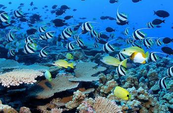 【亚龙湾】亚龙湾海底世界成人票(豪华游艇船环海游船票)-美团
