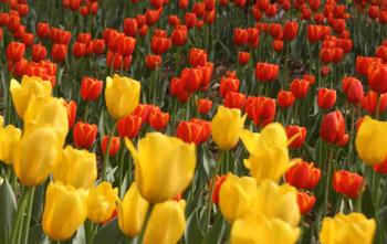 【淄博出发】红叶谷1日跟团游*一谷有四季四季不同天-美团
